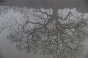 mist13