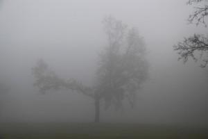 mist14
