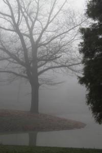 mist15