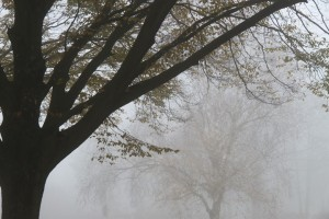mist20